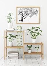 plants_woodshelf_frame_ontarioropeswing